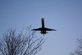 Airline Passenger Plane Coming in over trees, in Evening