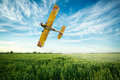 Airplane flies over a wheat field spraying fungicide and pestici Royalty Free Stock Photo