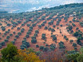 Ajloun, Jordan Stock Photo