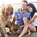 Ajouter au chien sur la plage Image libre de droits