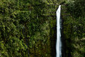 Akaka falls the beauty of on the big island of hawaii Royalty Free Stock Images