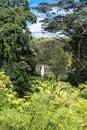 Akaka Falls, Big Island, Hawaii Royalty Free Stock Photo