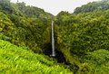Akaka falls hawaii big island famous hawaiian waterfall Royalty Free Stock Image