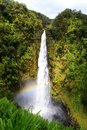 Akaka falls in hawaii with the rainbow at the base of the waterfall Royalty Free Stock Image