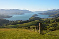 Akaroa harbour at dawn new zealand viewed fromt the summit road Stock Image