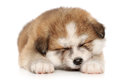 Akita inu puppy sweetly sleeping on a white background Royalty Free Stock Photos