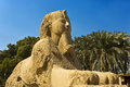 The alabaster sphinx at memphis egypt mit rahina open air museum found outside temple of ptah pyramid fields from giza to Stock Photos
