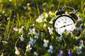 Alarm clock and flowers Royalty Free Stock Photo