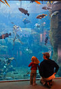 Alaska - Family Visiting Sea Life Center Royalty Free Stock Photo
