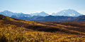 The alaska range in autumn mount mckinley and rise above blazing colors Royalty Free Stock Photo