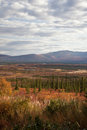 Alaska range in denali fall foliage along the highway Royalty Free Stock Image