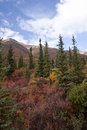 Alaska range in denali fall foliage along the highway Stock Photography