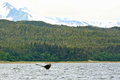 Alaska Whale in the Remote Wild Stock Photo