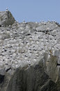 Alaskan gulls roosting on rock face Stock Photos