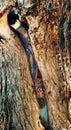 Albuquerque's Hidden Treasure Royalty Free Stock Photography