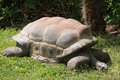 Aldabra giant tortoise aldabrachelys gigantea resting in the grass Royalty Free Stock Images