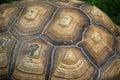 Aldabra Giant Tortoise Shell Detail Royalty Free Stock Photo