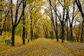 Alee padure toamna frunze cazute banci verzi fallen leaves in autumn forest alley green banks Stock Images