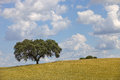 Alentejo farm view in the south of portugal Royalty Free Stock Photo