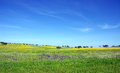 Alentejo at spring time field of Royalty Free Stock Photo