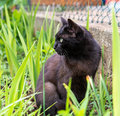 Alert cat in the grass closeup of a black green Stock Image