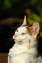 Alert cat outdoor head portrait of a white with bright green eyes long whiskers and attentive facial expression Stock Images