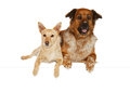 Alert dog companions lying side by side Stock Photo