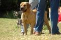 Alert dog on guard Stock Photo