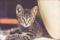 Alert kitten peering through glass Royalty Free Stock Photo