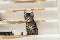 Alert little kitten sitting on a wooden shelf Royalty Free Stock Photo