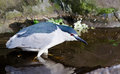 Alert night heron a in an crouching stance in a pond Royalty Free Stock Images