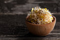 Alfalfa sprouts in a wooden bowl close up of Royalty Free Stock Photos