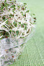 Alfalfa in transparent container on a green tablecloth Royalty Free Stock Photos
