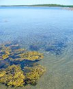 Alga on the bank in transparent water river Stock Photography