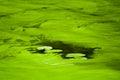 Alga at a river during summer time Stock Photos