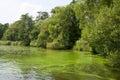 Alga at a river during summer time Stock Image