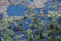 Algae Royalty Free Stock Photos