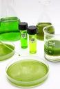 Algae biofuel Stock Image