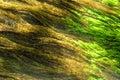 Algae closeup of growing in water Stock Image