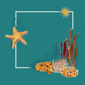 Algae, corals and starfish. Vector background. Royalty Free Stock Photo