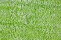 Algae texture Stock Images