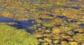 Algaes Royalty Free Stock Photo