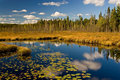 Algonquin Park Autumn Royalty Free Stock Image