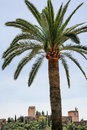 Alhambra and palm tree spain Stock Photo
