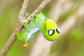 Alien caterpillar Royalty Free Stock Photo