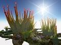 Alien Plants Pikaka Royalty Free Stock Photo