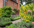 Aliums laburnum and topiary in an english garden Stock Photo