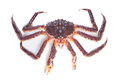 Alive kamchatka crab on white background Stock Photos