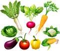 All kind of vegetables