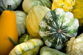 All kinds of gourds Royalty Free Stock Images